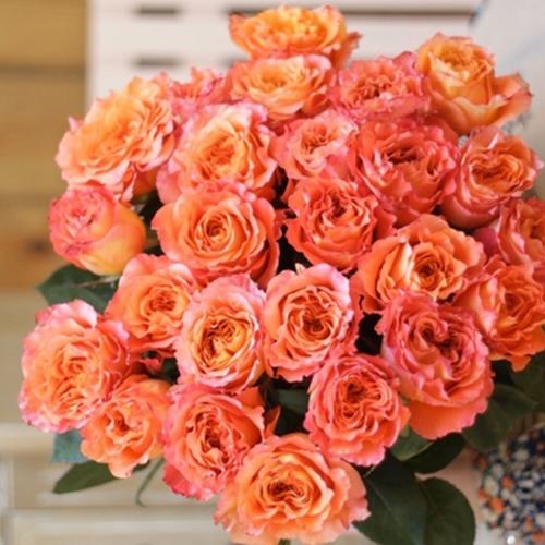 Оранжевая роза Free Spirit