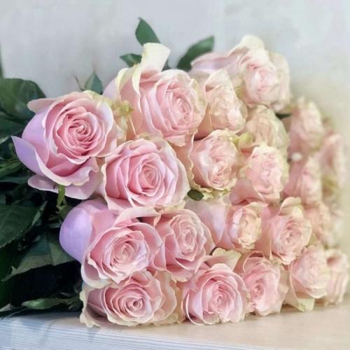 Светло-розовая роза Pink Mondial