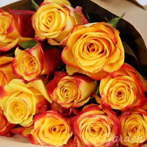 Желтая роза с красным High Yellow