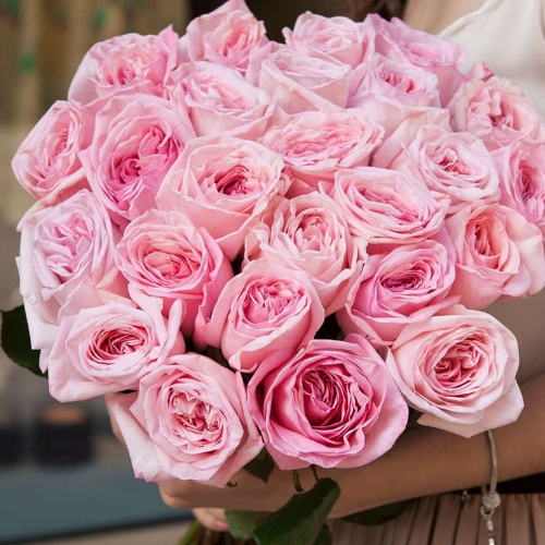 Садовая роза Pink O'Hara